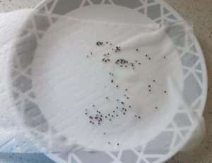 seeds scattered on wet paper towel on top of plate