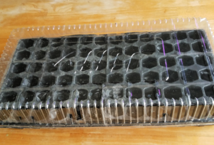 seed starting cell flat tray