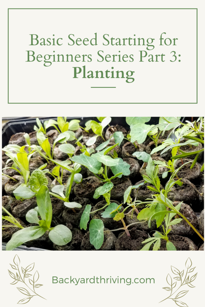 Pinterest Pin for basic seed starting with seedlings