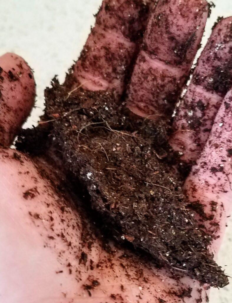 hand holding moist soil