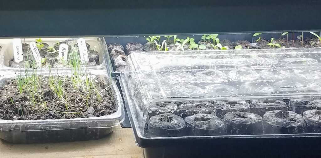 seed starts under a grow light